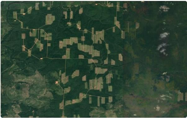 Что творится на Байкале. Приняли закон о вырубке леса и продают китайцам